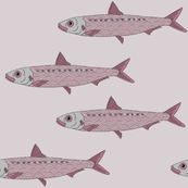 pink pilchard pink background