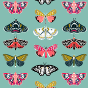 Moths - Mint Background - Beautiful Winged Butterflies by Andrea Lauren