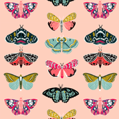 Moths - Pale Pink background - Beautiful winged Butterflies by Andrea Lauren