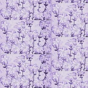Suga Lane lilac purple fireworks
