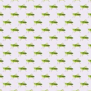 Preppy Grasshopper Lilac