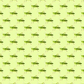 Preppy Grasshopper Lime