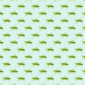 Preppy Grasshopper Spa