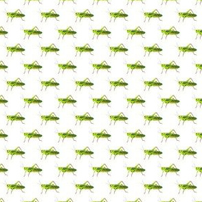 Preppy Grasshopper White