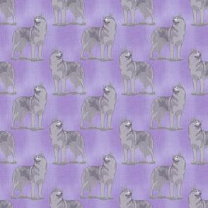 Posing Siberian Husky - purple