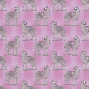 Posing Siberian Husky - pink
