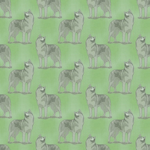 Posing Siberian Husky - green