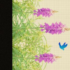 Lavender_Rainbow-2-1