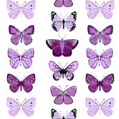Butterflies - Purples and Whites by Andrea Lauren