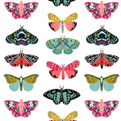 Moths - White Background - Beautiful winged Butterflies by Andrea Lauren