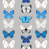 Butterflies - Greys, Blues, and White by Andrea  Lauren