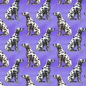 Sitting Dalmatians - purple