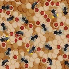 austnativebees1