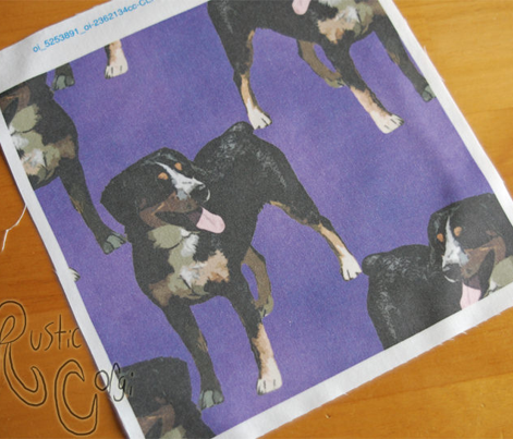 Posing Entlebucher mountain dog - purple