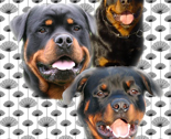 Rrottweilers_and_thistles_thumb