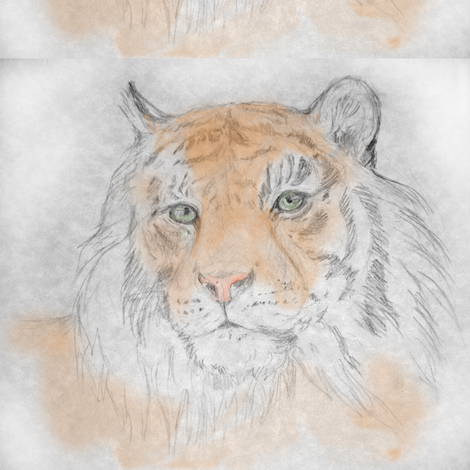 Tiger, Tinted