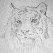 Tiger, Gray Tones (sized for Linen)