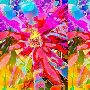 Bursting Blossom