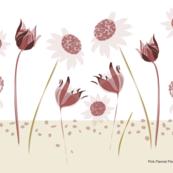 Pink_Flannel_Flowers_quarter bush brown