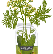 Dill Pickles White