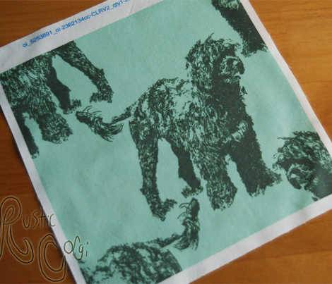 Posing Portuguese Water Dog - green