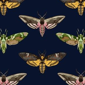 Hawk Moths 1