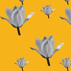 Six grey tulips on orange.