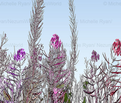 Rpink_floral_border2_copy_comment_578550_thumb