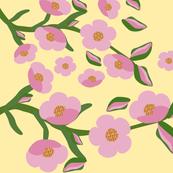 single_rock_rose_border_flower_