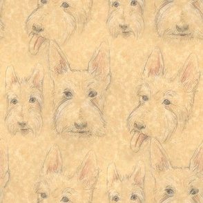 Wheaten Scottie Portraits