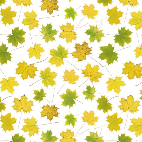 tiny maple leaves on white