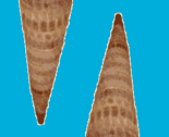 Rspiral_double_thumb