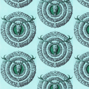 skullflowersaqua