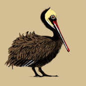 pelican_on_parade_merle