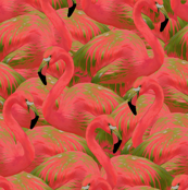 Flamingo Fever in Kiwi