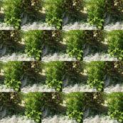 Green Realm Windows (Ref. 0368)