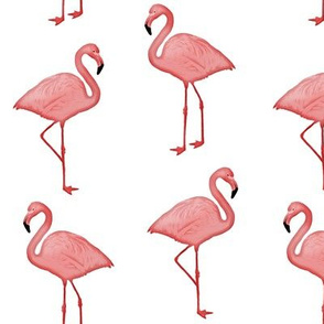 Bimini Bay Flamingos