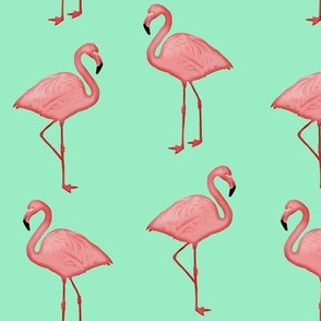 Bimini Bay Flamingos on Mint