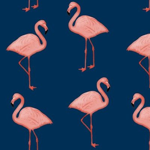 Bimini Bay Flamingos on Navy