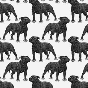 Posing Staffordshire Bull Terrier - gray