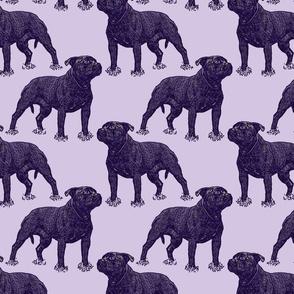 Posing Staffordshire Bull Terrier - purple