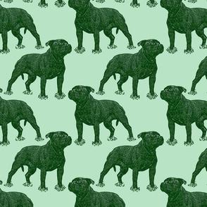 Posing Staffordshire Bull Terrier - green