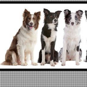 Border Collie Border Fabric