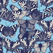 butterfly sky blue