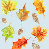 fall leaves and acorns in sky