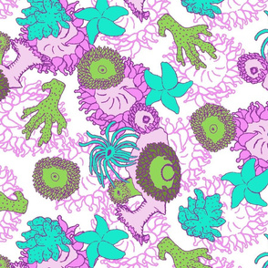 Purple Anemone Coral Reef Fauna