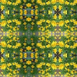 Sunny Daisy Chain (Ref. 1206)