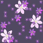 Purple Clematis on Purple Background