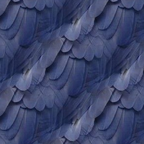 blue_feather