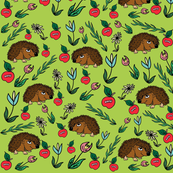 apples and hedgehogs